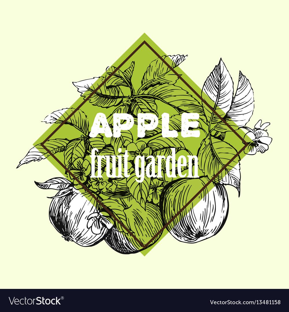 Sketch of apple