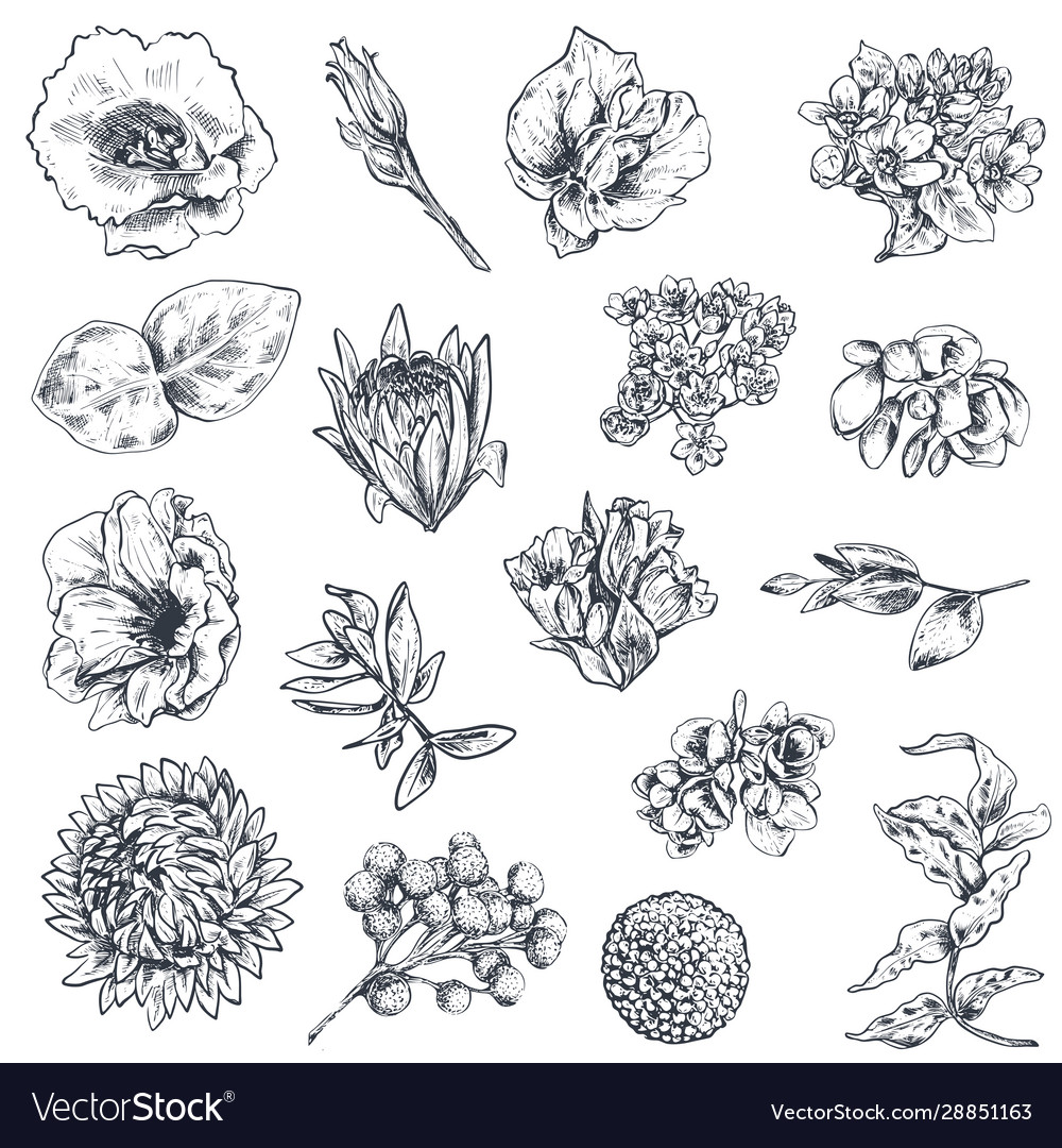 Collection hand drawn flowers and plants