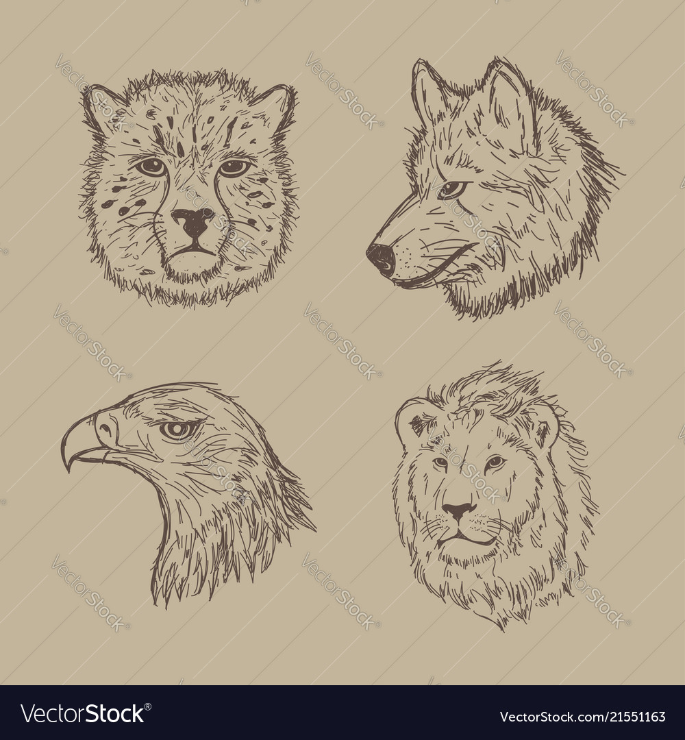 Collection of animal with hand drawing