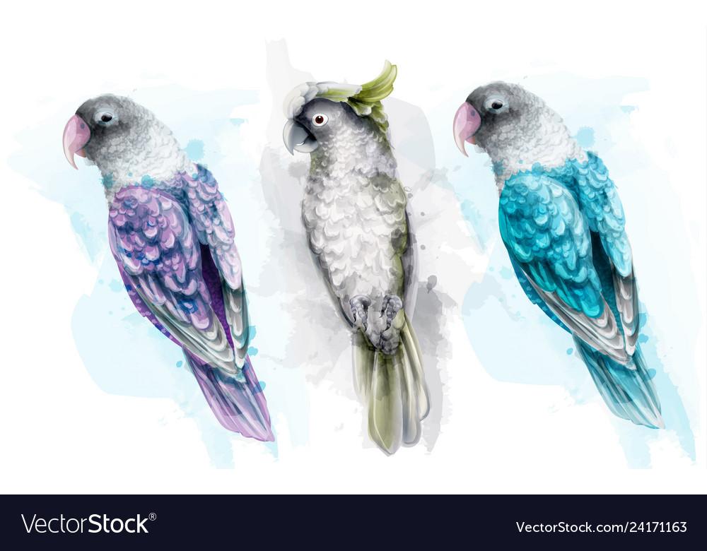 Colorful tropic parrot birds watercolor