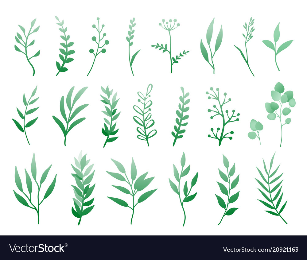 Set of herbs and branches