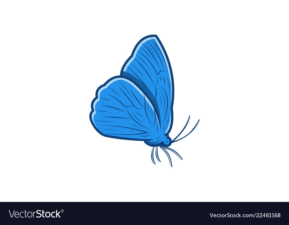 Butterfly logo designs inspiration isolated on