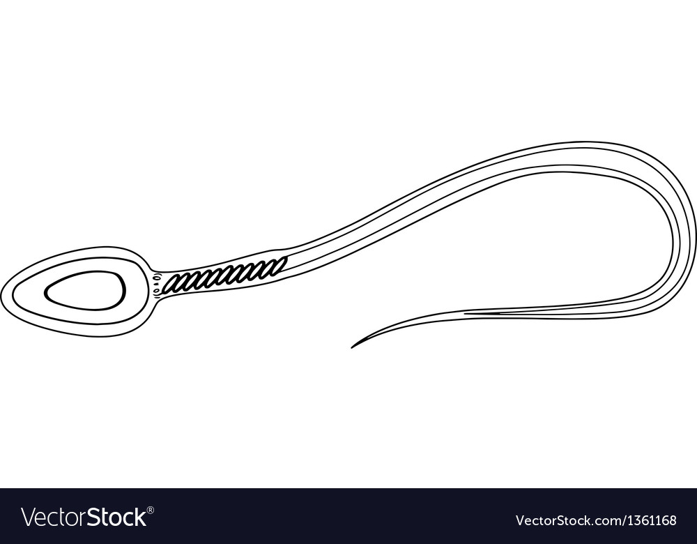 Sperm cell Royalty Free Vector Image - VectorStock