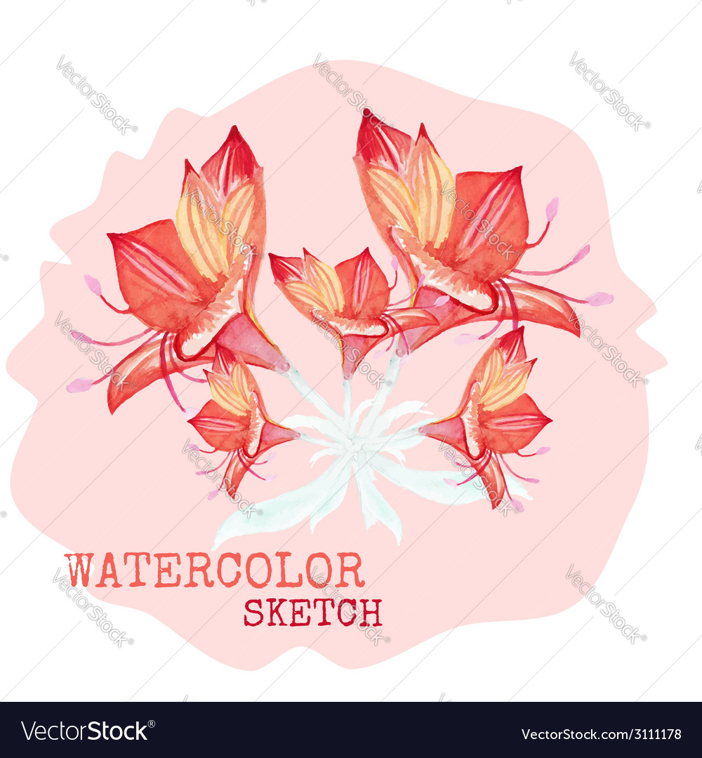 Watercolor painted flowers vector image