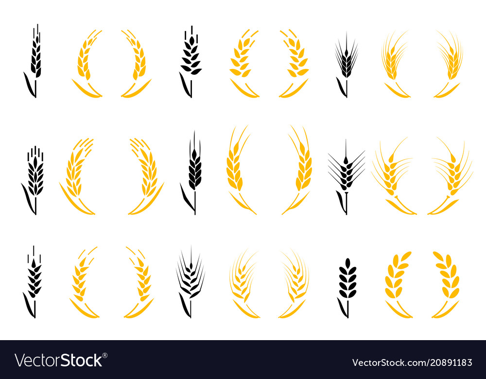 Agriculture wheat wheat ears icons and logo set