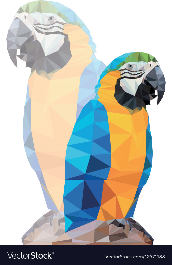 tropical triangular blue macaw parrot on a rock vector image