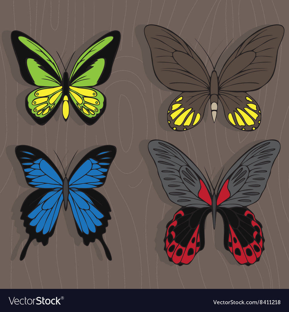 Big realistic collection of colorful butterflies