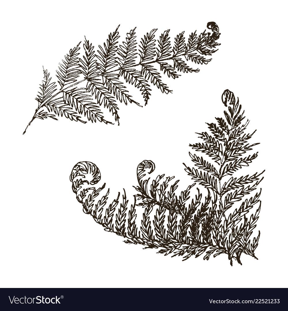 Fern set hand drawn botanical