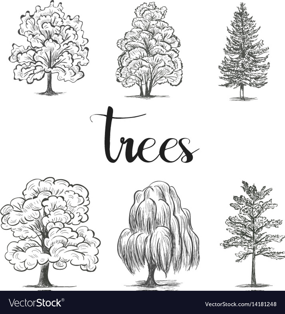 Trees Sketch Set Graphic Forest Royalty Free Vector Image
