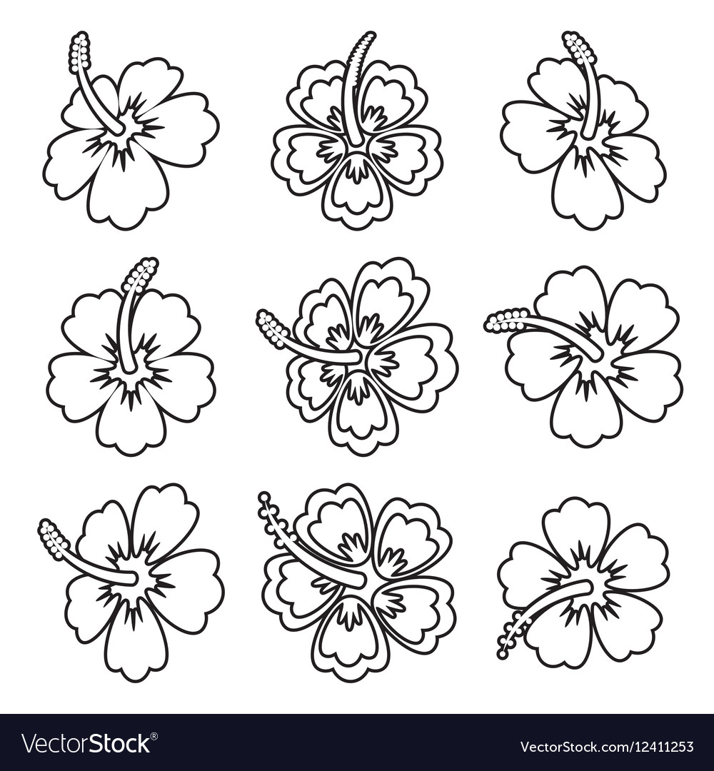 Hibiscus Flower Outline Icons Royalty Free Vector Image