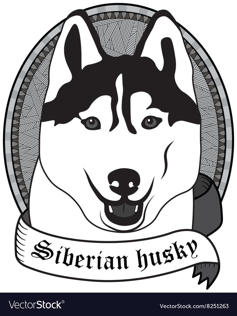 Siberian husky Portrait Isolated dog