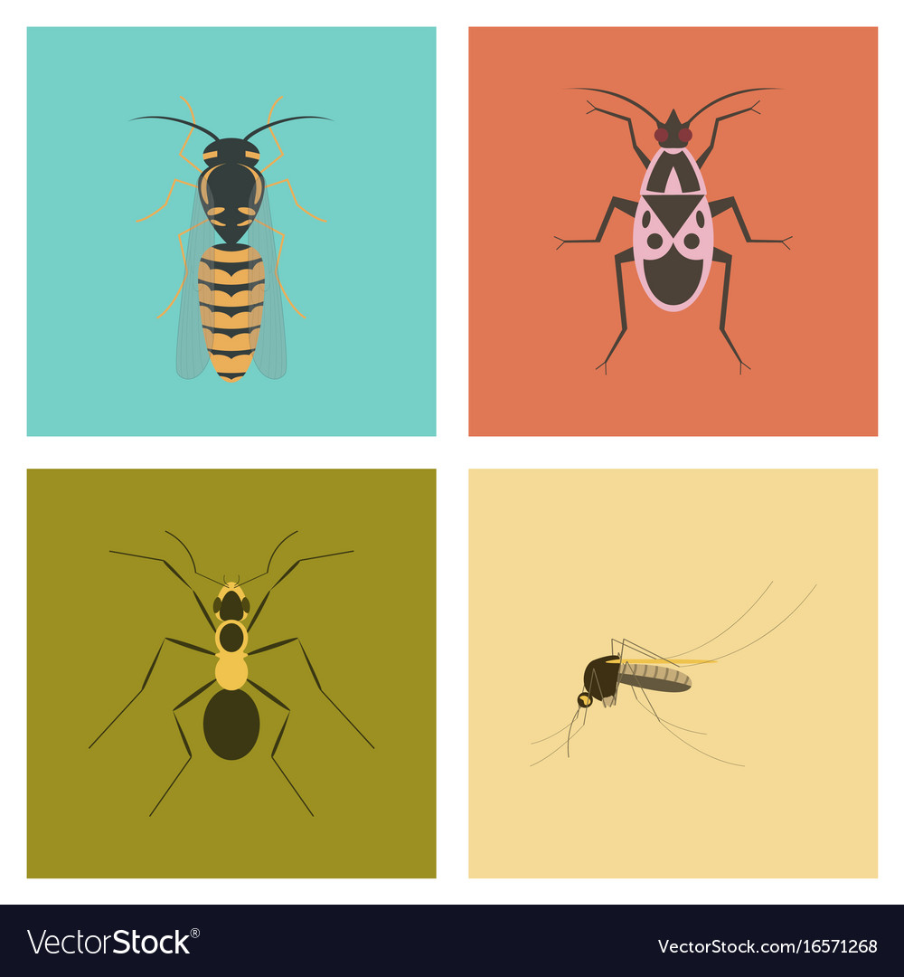insect icon flat isolated nature flying bug beetle