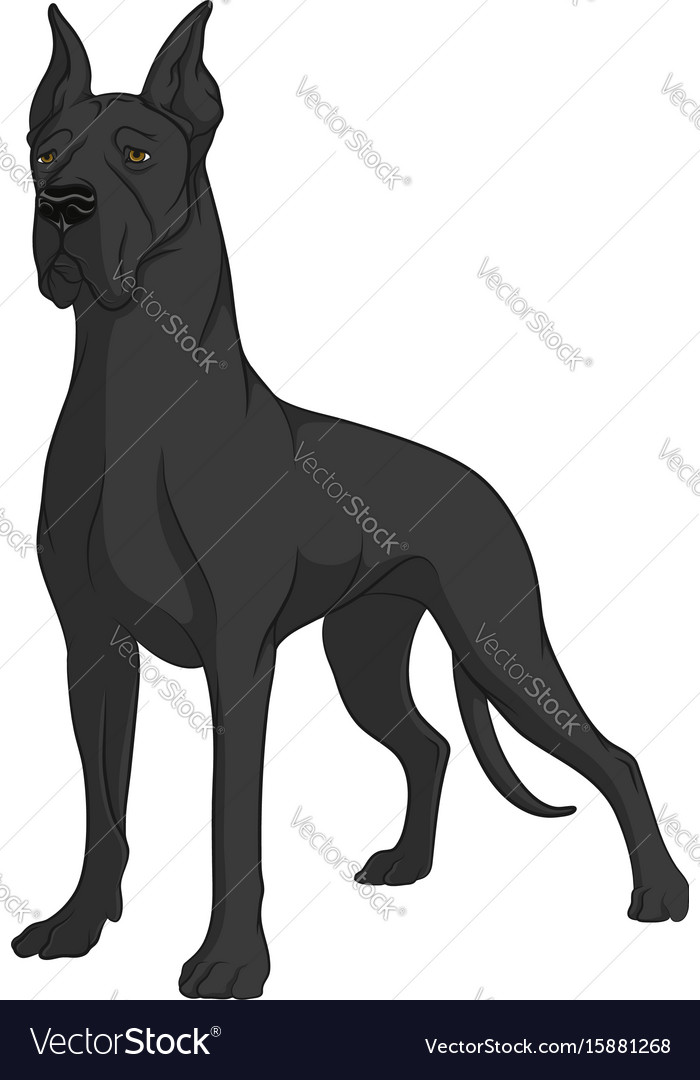 Color image of a black great dane