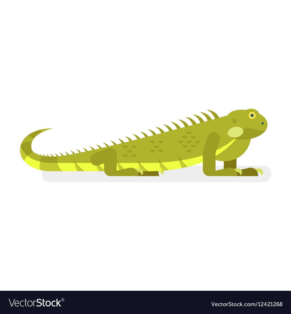 Flat style of iguana