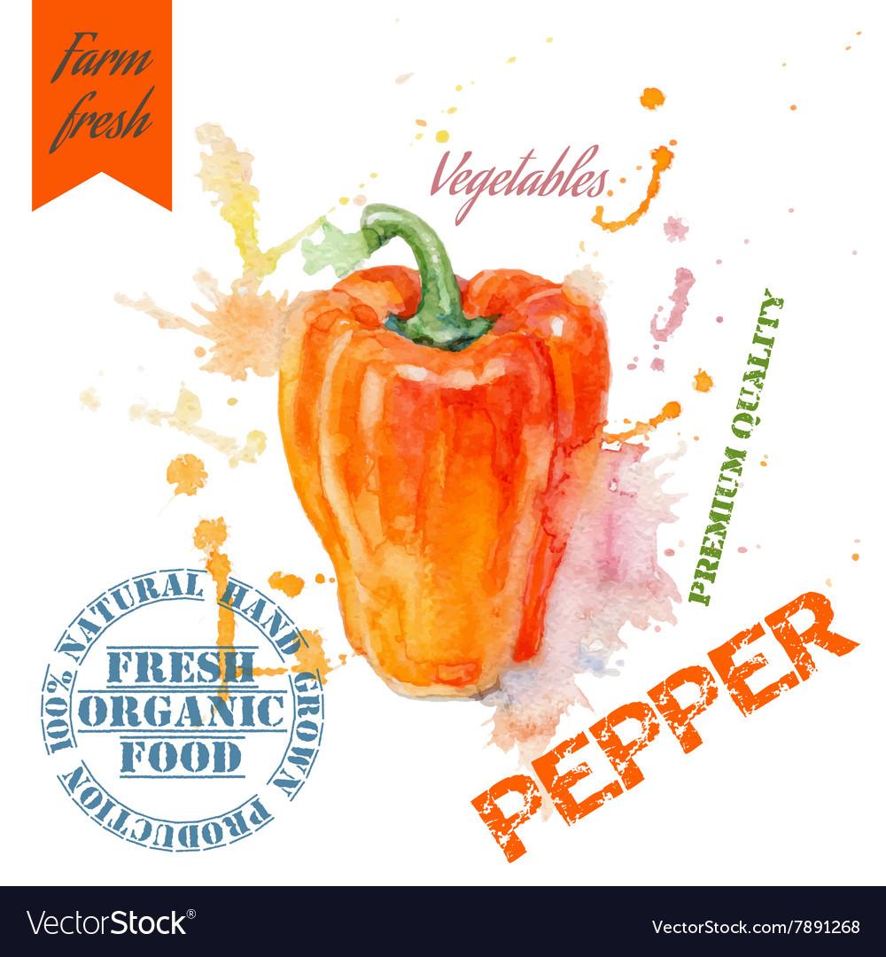 Pepper watercolor banner vector image