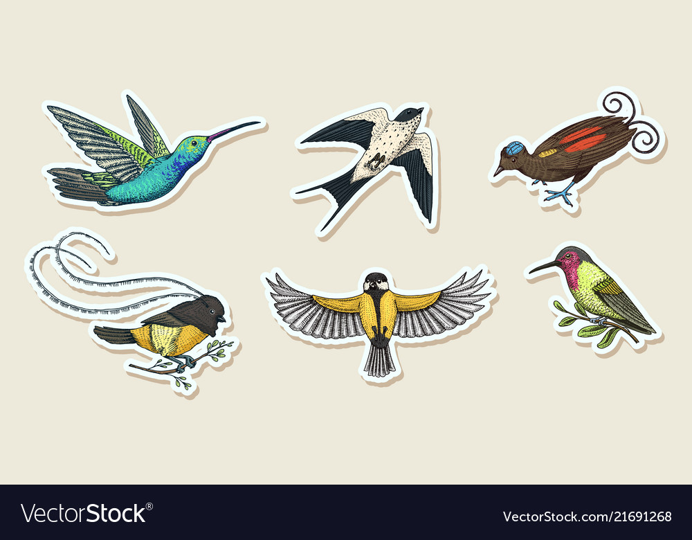 Small birds paradise stickers wilson s and