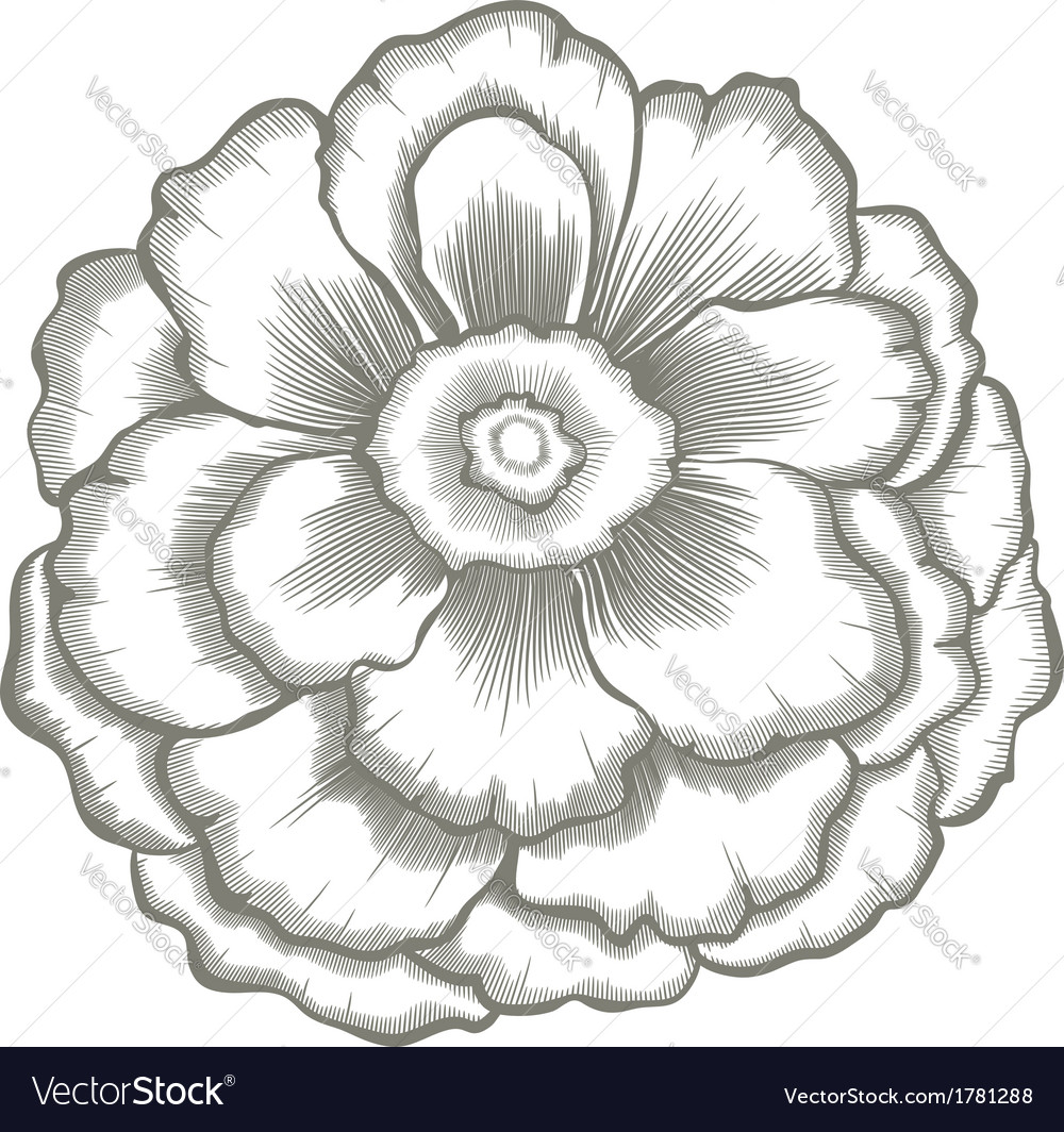 Hand painted flower vector image