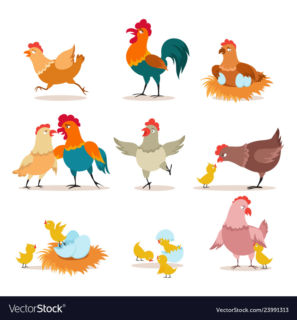 Cartoon chicken chick with eggs hen and rooster