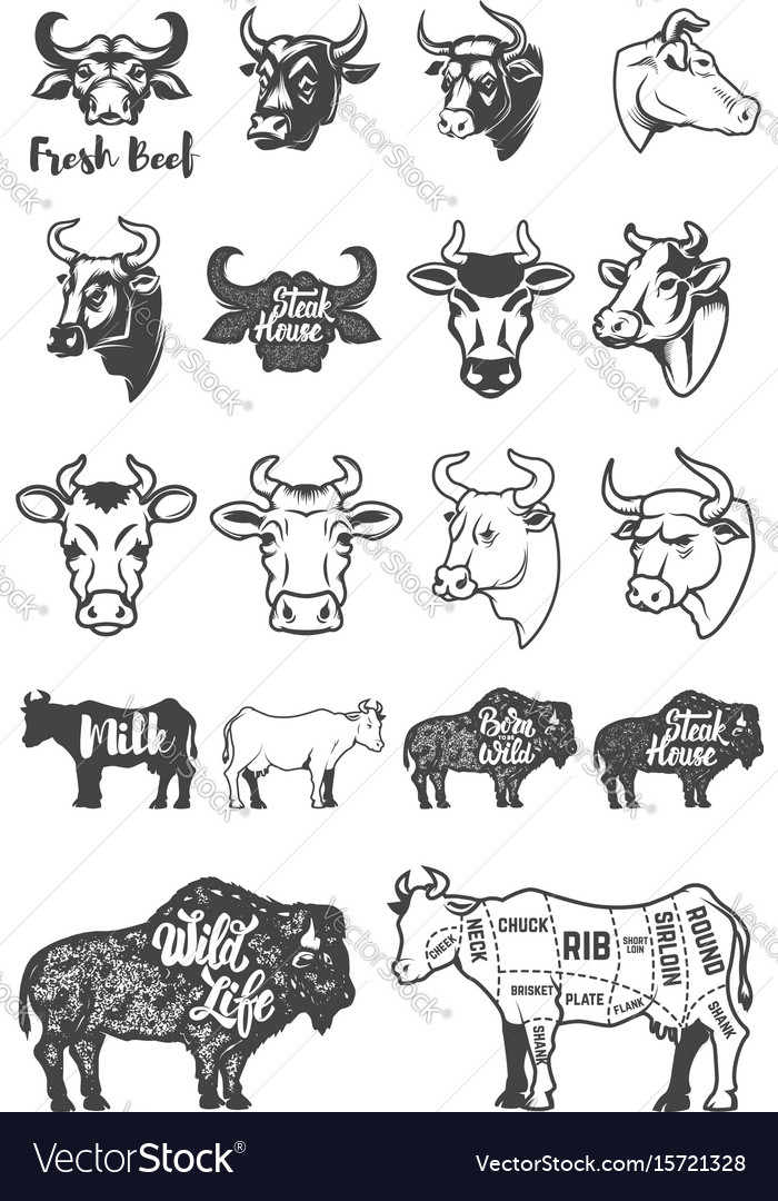 Big set of cow heads and silhouettes design