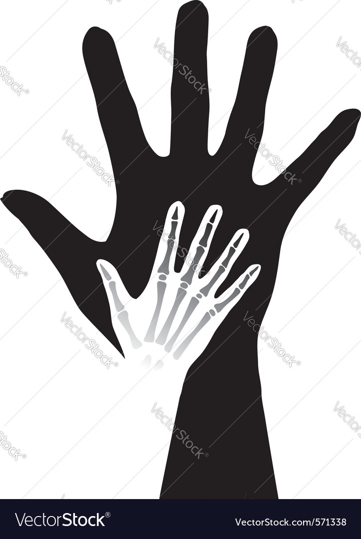 Anatomy hands Royalty Free Vector Image - VectorStock