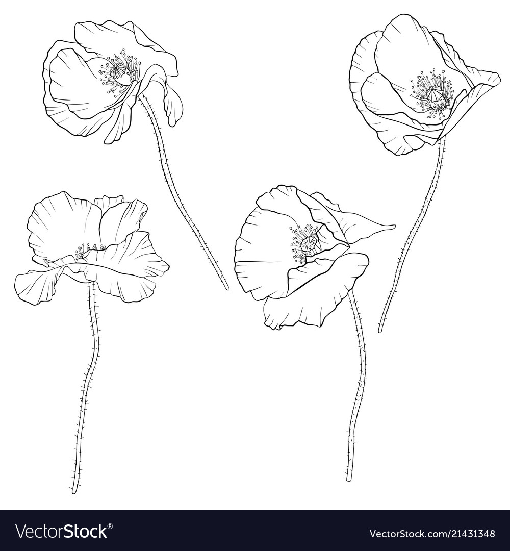 Set Of Drawing Poppy Flowers Royalty Free Vector Image