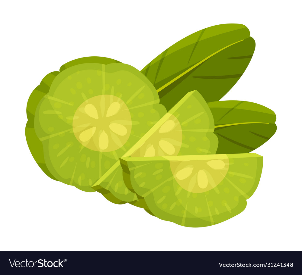 Sliced Garcinia Cambogia Fruit Looking Like Small Vector Image