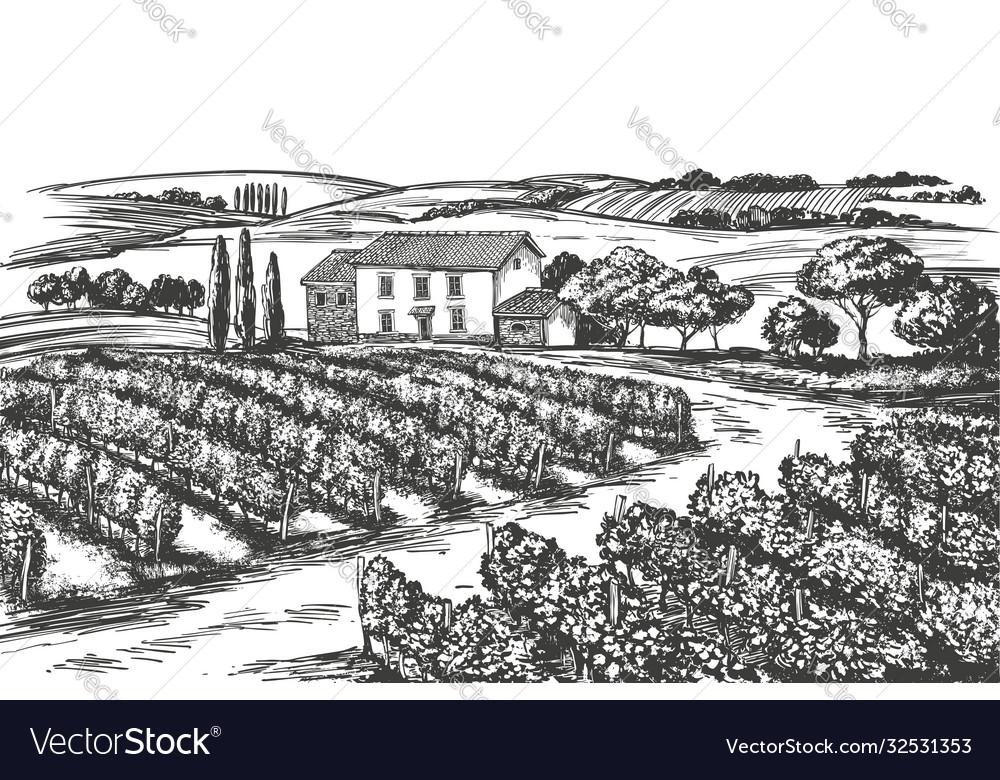 Summer landscape provence grape vine vineyard