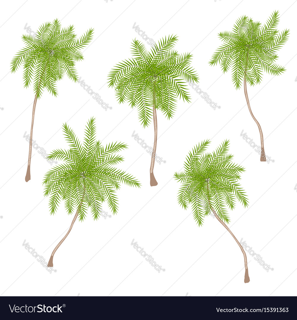 Set of stylized palm trees isolated on white vector image