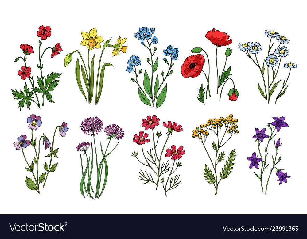 Wild flowers meadow plants monkshood thistle