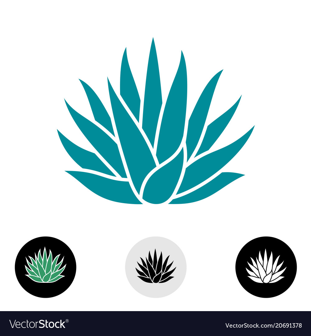 Blue agave plant silhouette