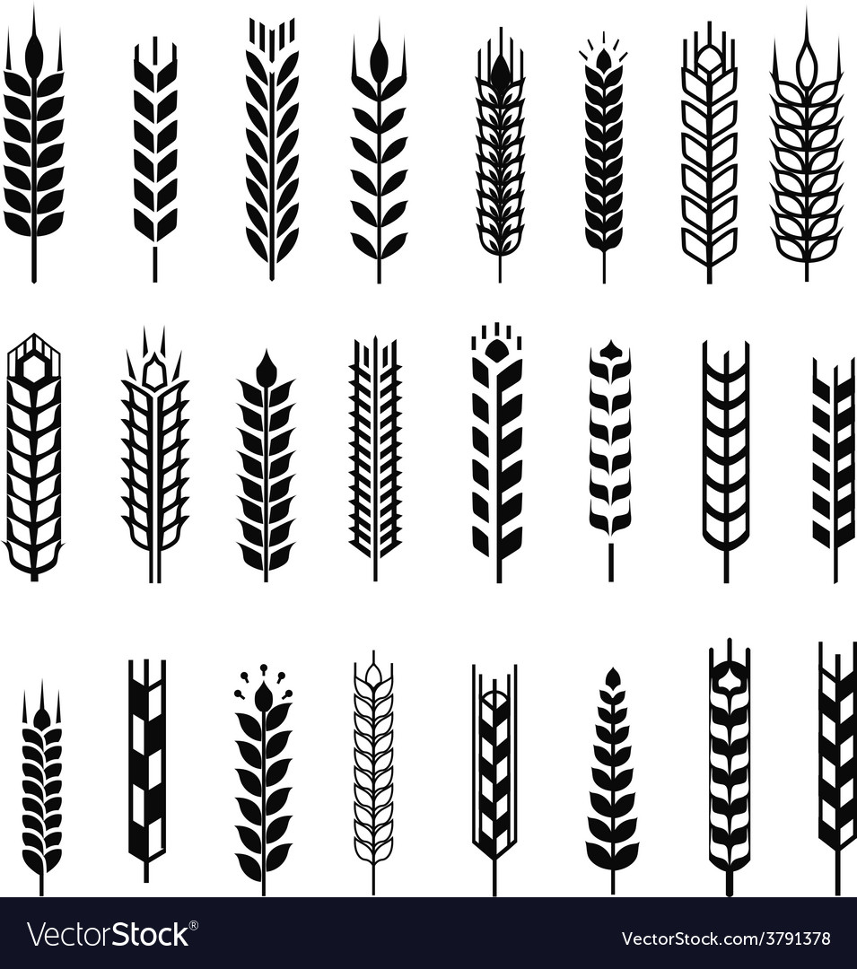 Wheat ear icon set graphic design elements black