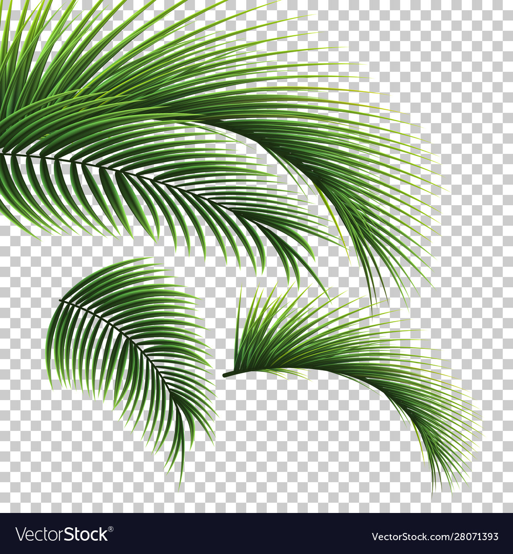Palm Leaves Green Leaf Palm Tree On Royalty Free Vector
