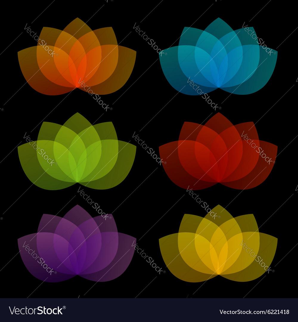 Graceful lotus with 5 petals vector image