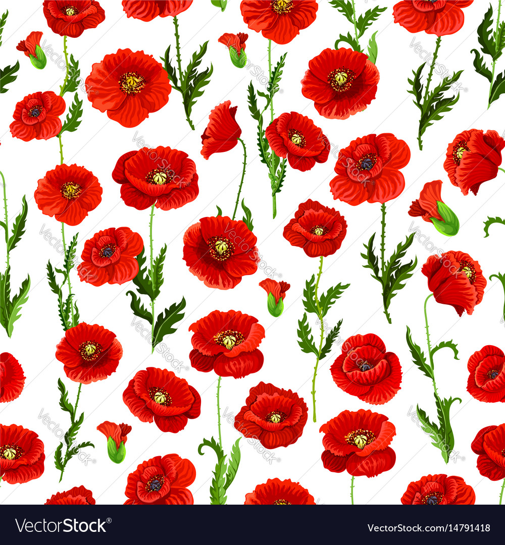 Seamless pattern of poppy flowers bunch royalty free vector seamless pattern of poppy flowers bunch vector image mightylinksfo