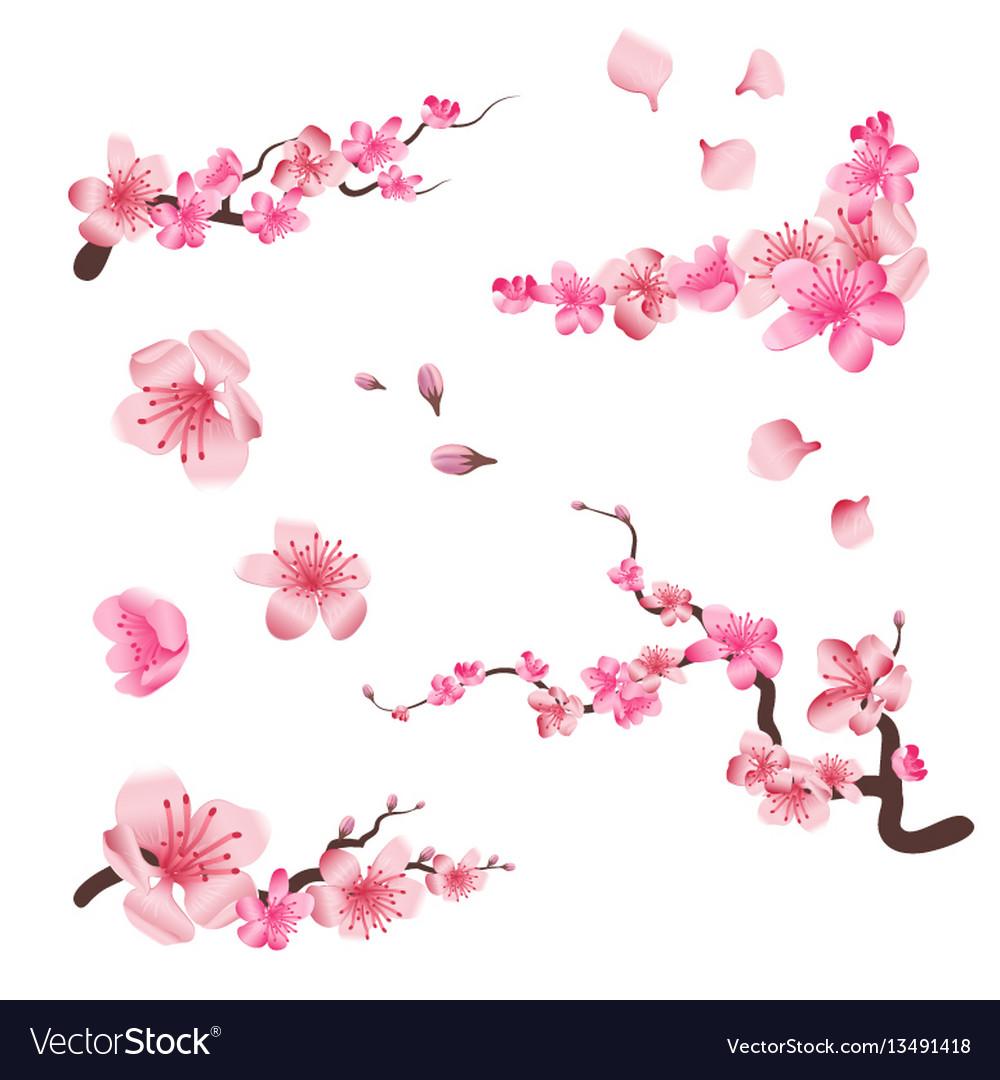 Spring sakura cherry blooming flowers pink petals
