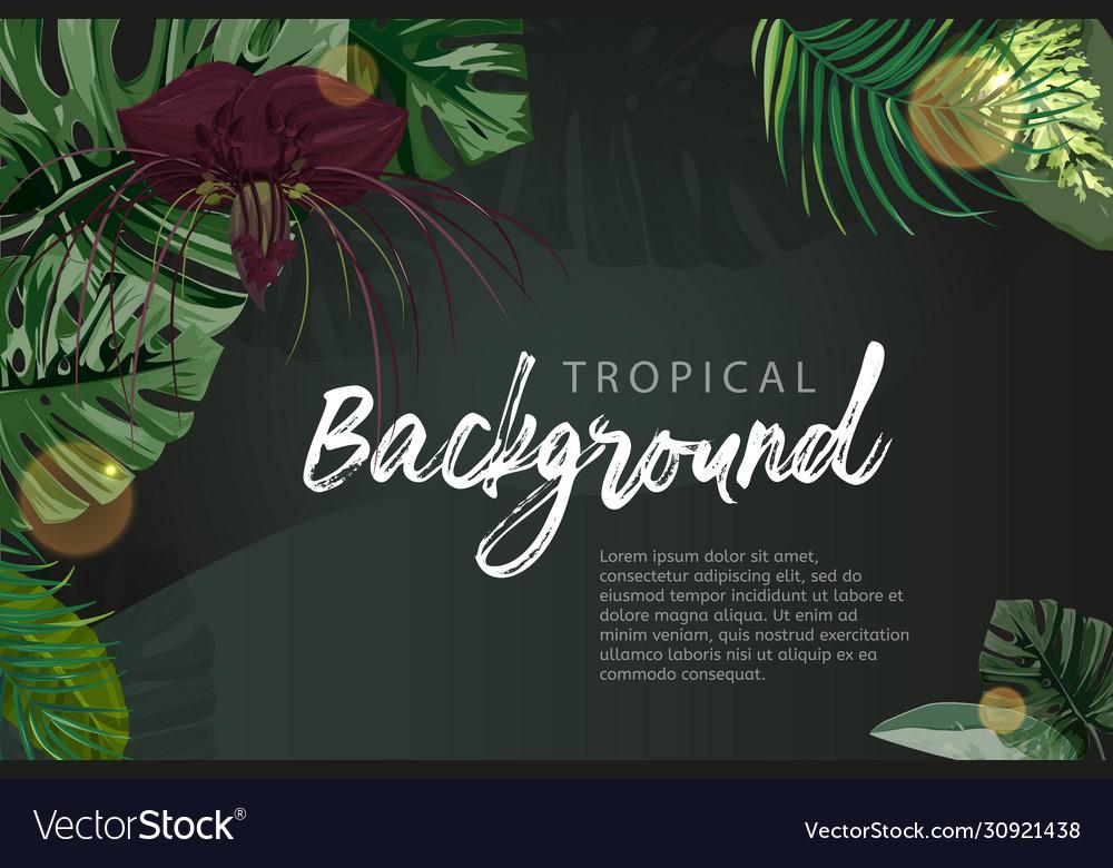 Dark green tropical background monstera palm