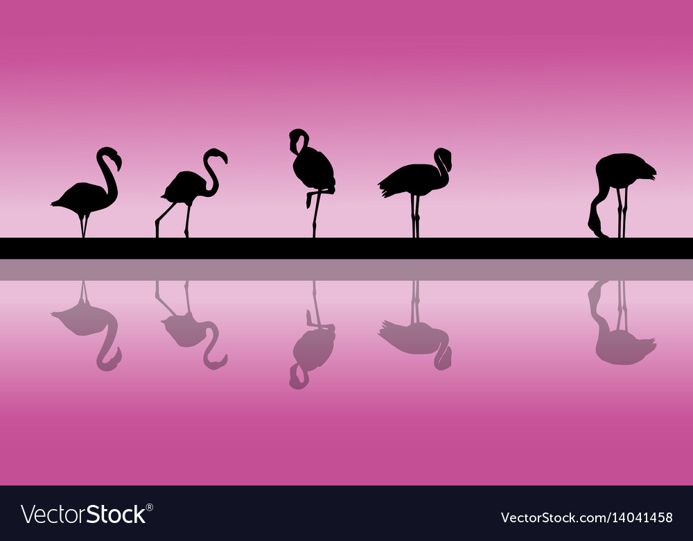 Flamingo lined at sunset scenery silhouettes