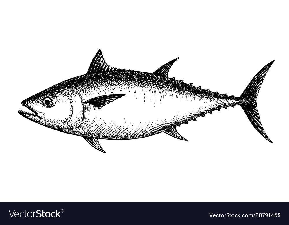 Ink sketch of tuna