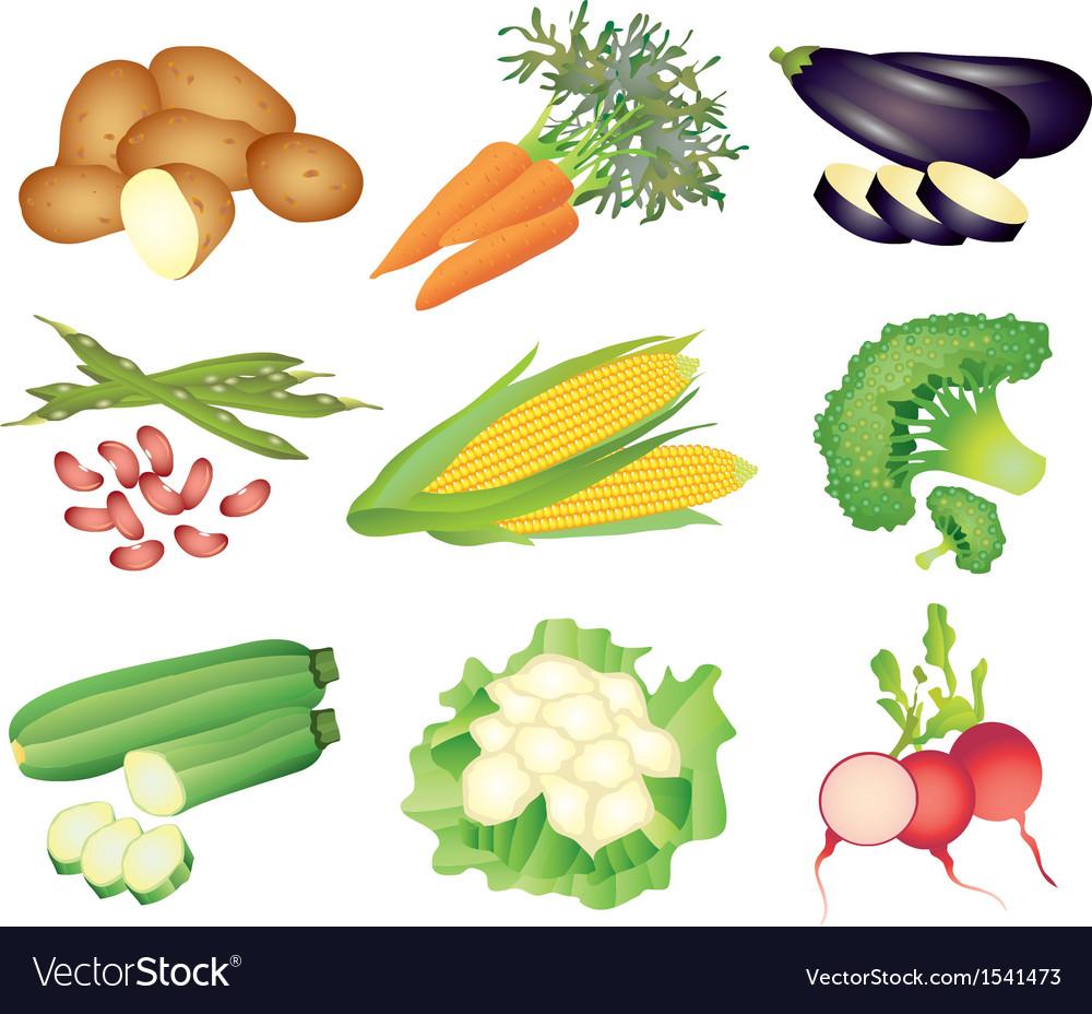 Vegetables popular set vector image
