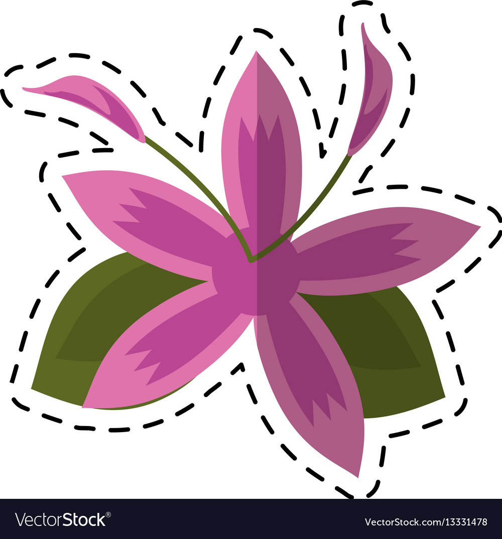 Cartoon flower daylily beautiful flora vector image