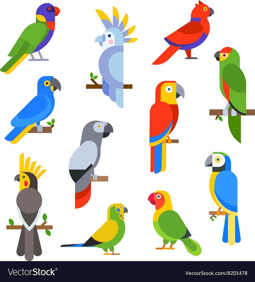 Cartoon parrots set and parrots wild animal birds