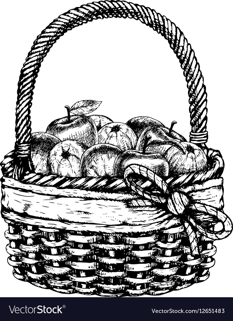 Hand drawn basket with apples sketch