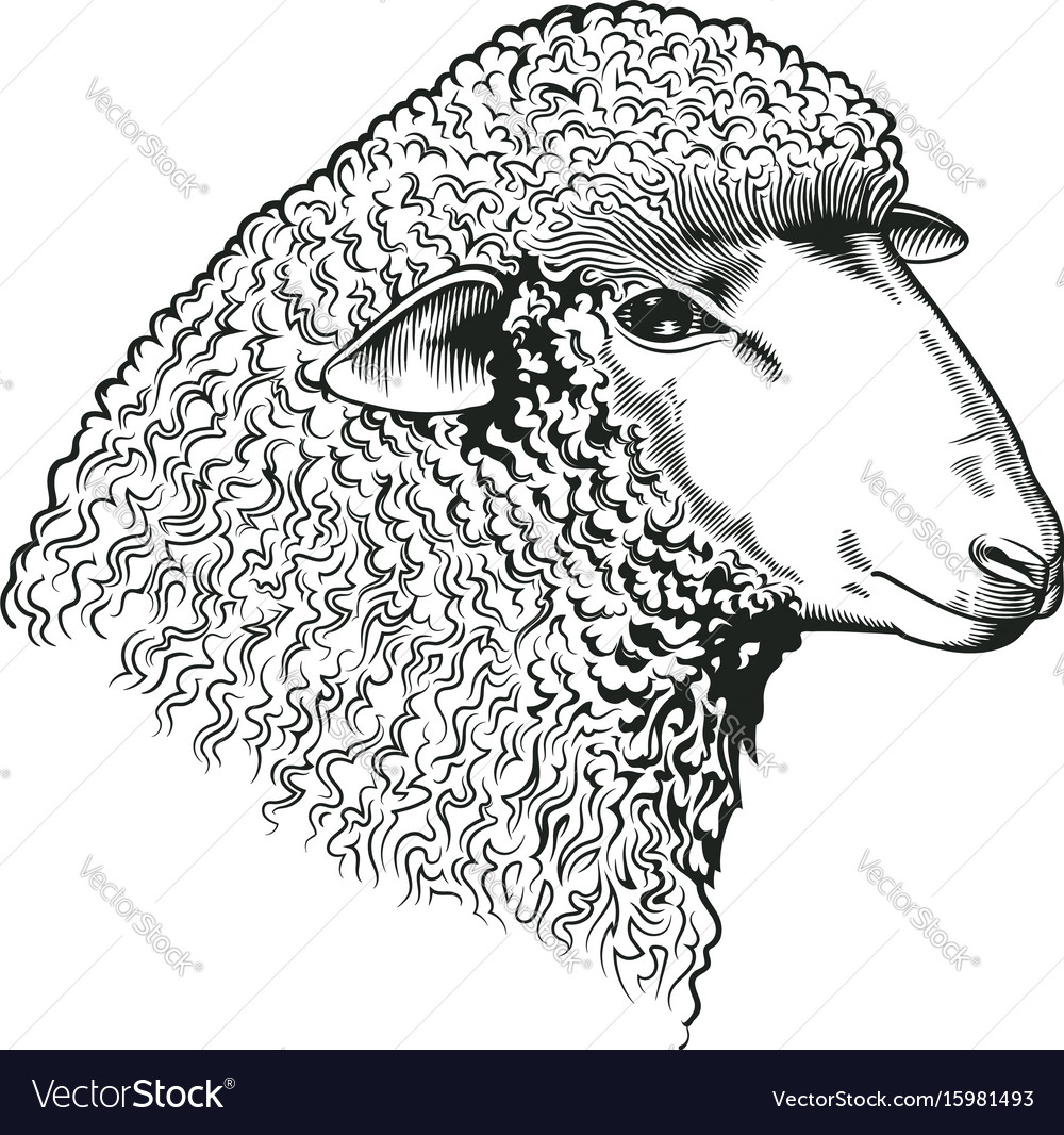 Head of sheep drawn in etching style farmed vector image