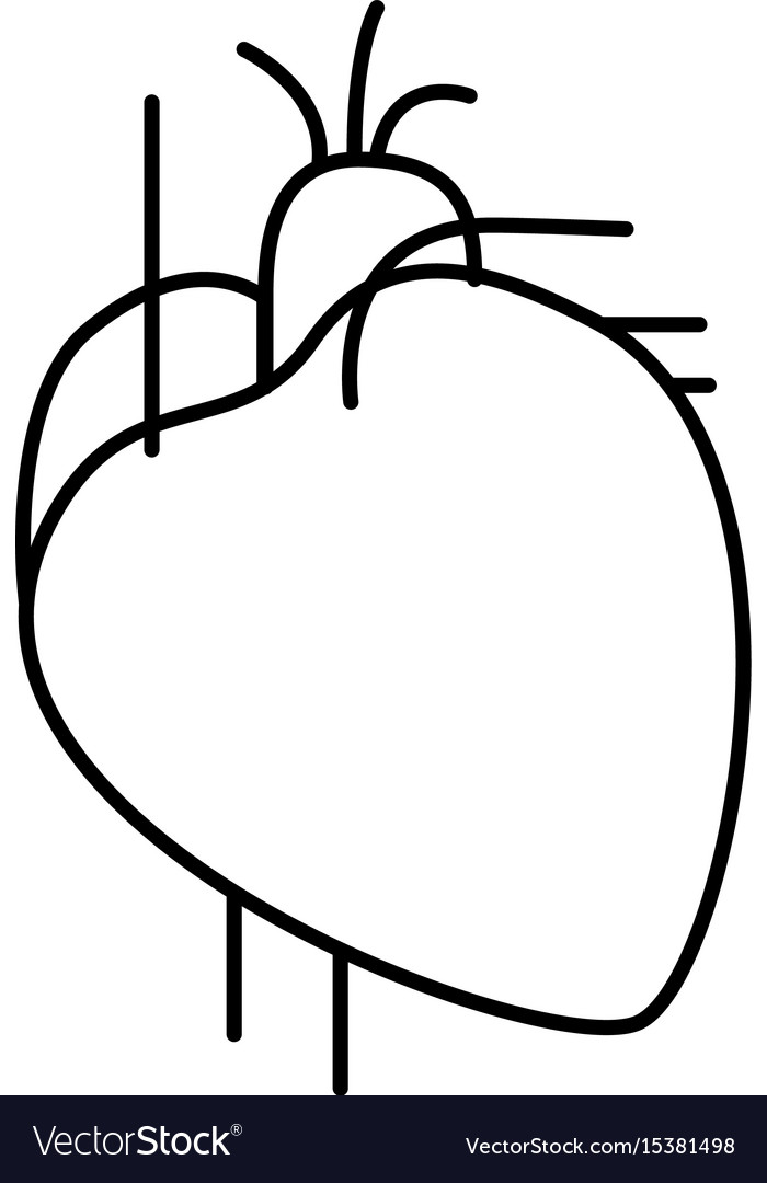 Hand drawing contour heart system human body vector image