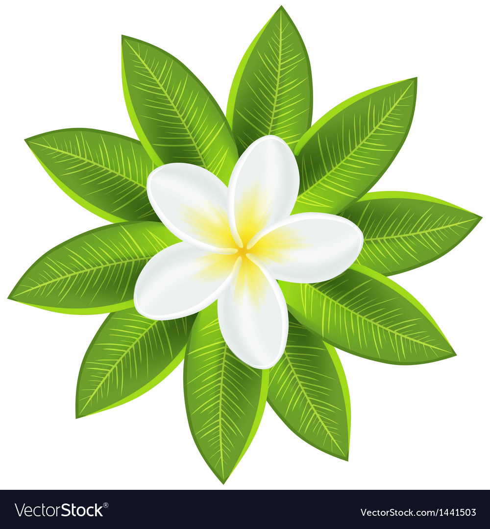 Beautiful white tropical flower royalty free vector image beautiful white tropical flower vector image mightylinksfo