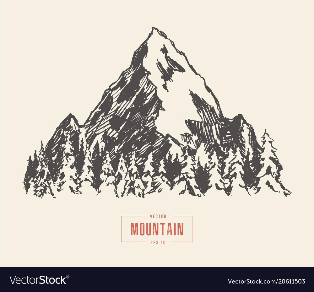 Mountain peak pine forest hand drawn sketch