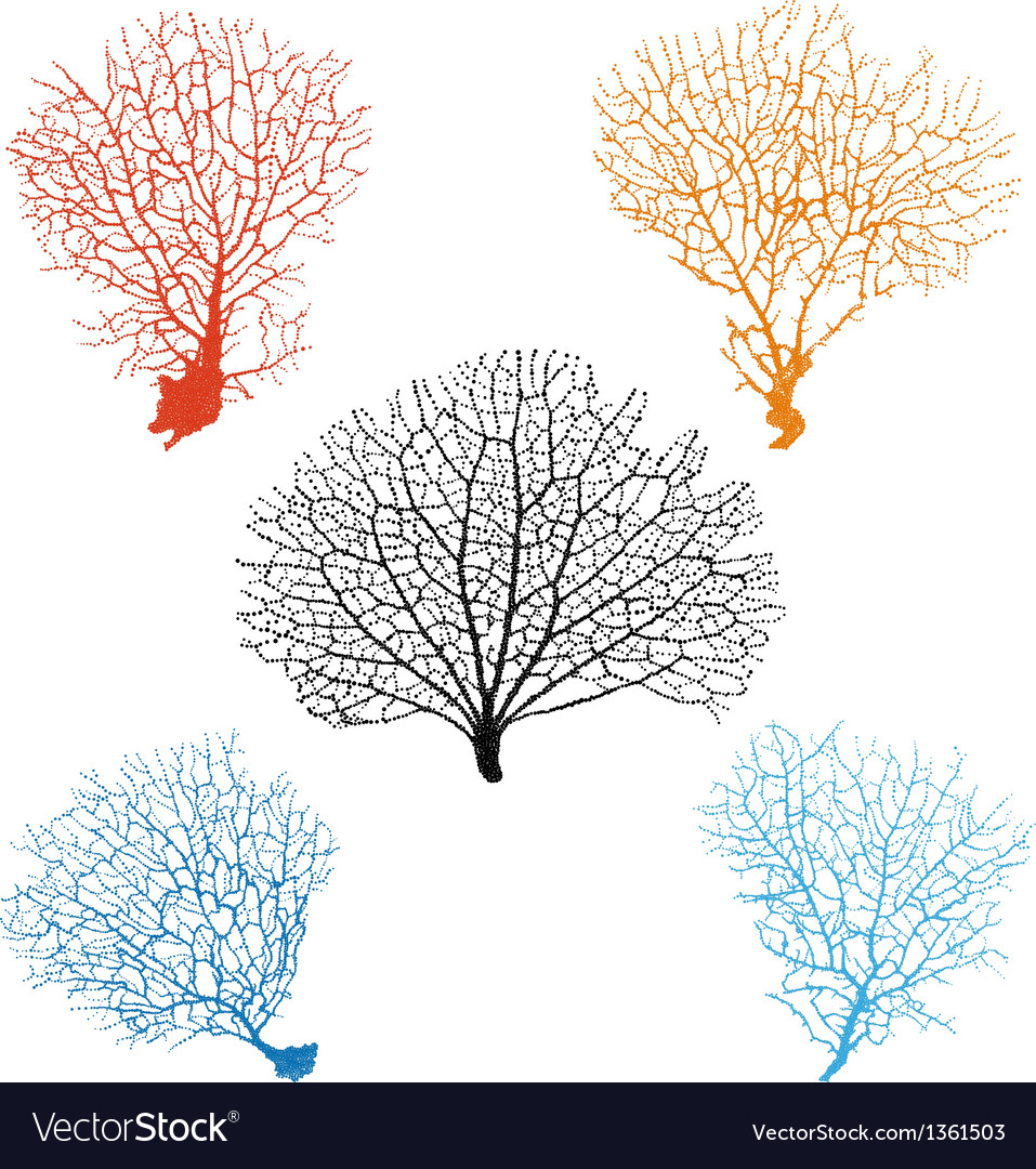 Sea fan corals set royalty free vector image vectorstock sea fan corals set vector image publicscrutiny Images