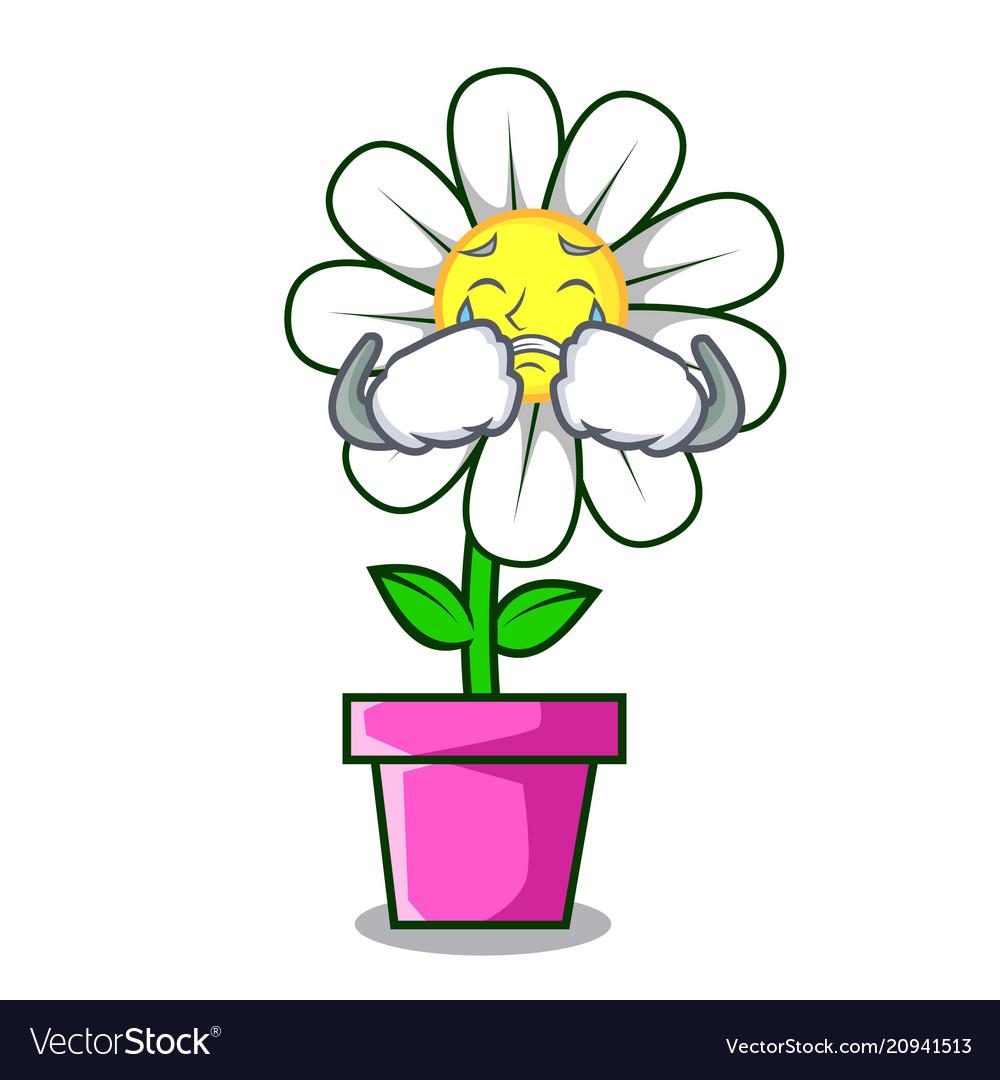 Crying daisy flower mascot cartoon royalty free vector image crying daisy flower mascot cartoon vector image izmirmasajfo
