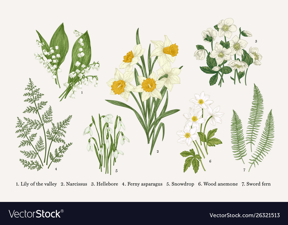 Set with spring flowers