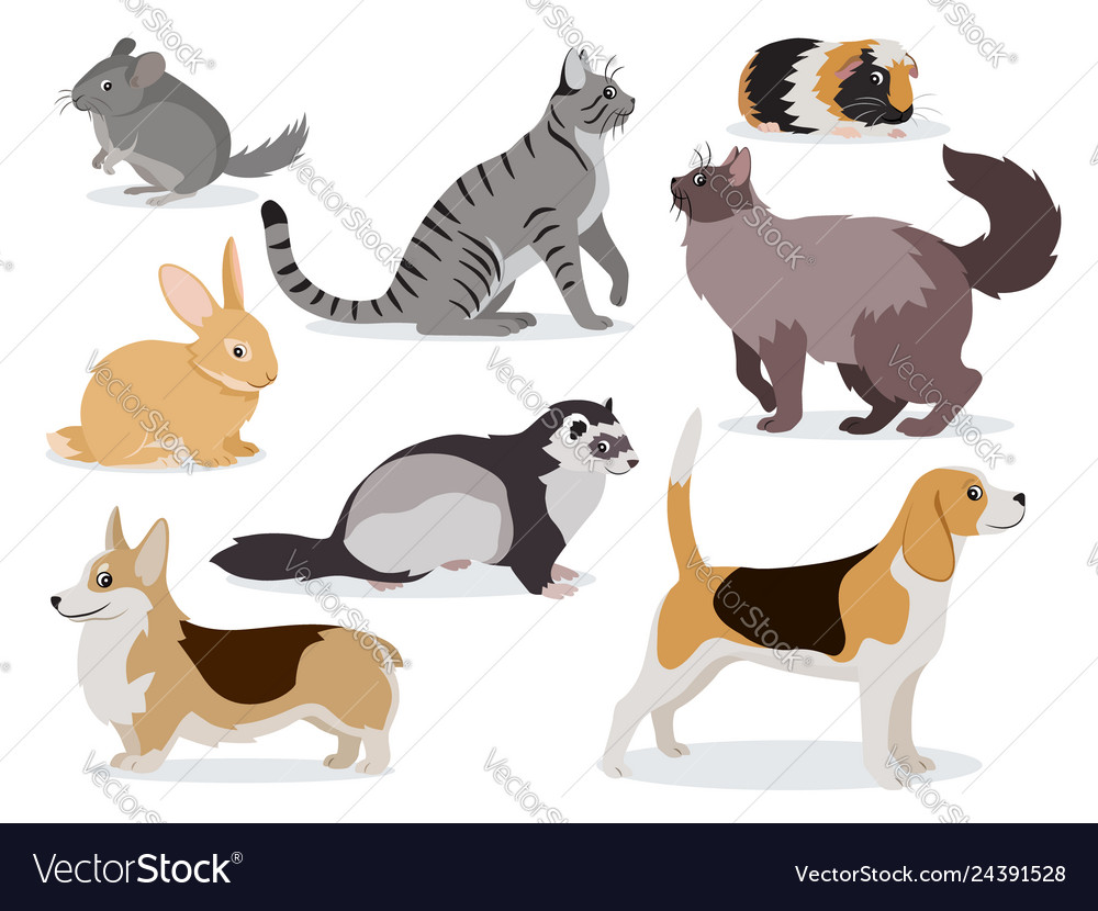 Pets icon set cute gray chinchilla fluffy ferret